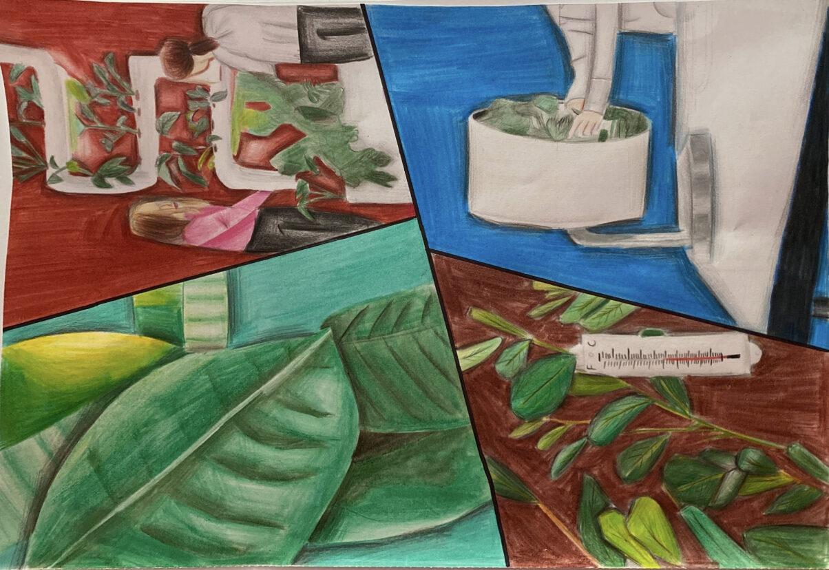 Staying Green Sustainably by Adaira Mufaddal Palitanawala