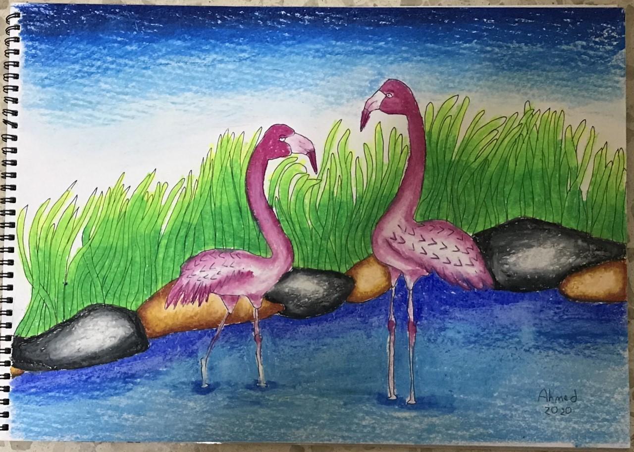 Flamingo Wildlife Park in Al Wathbah, Abu Dhabi, UAE by Ahmed Abdulraheem