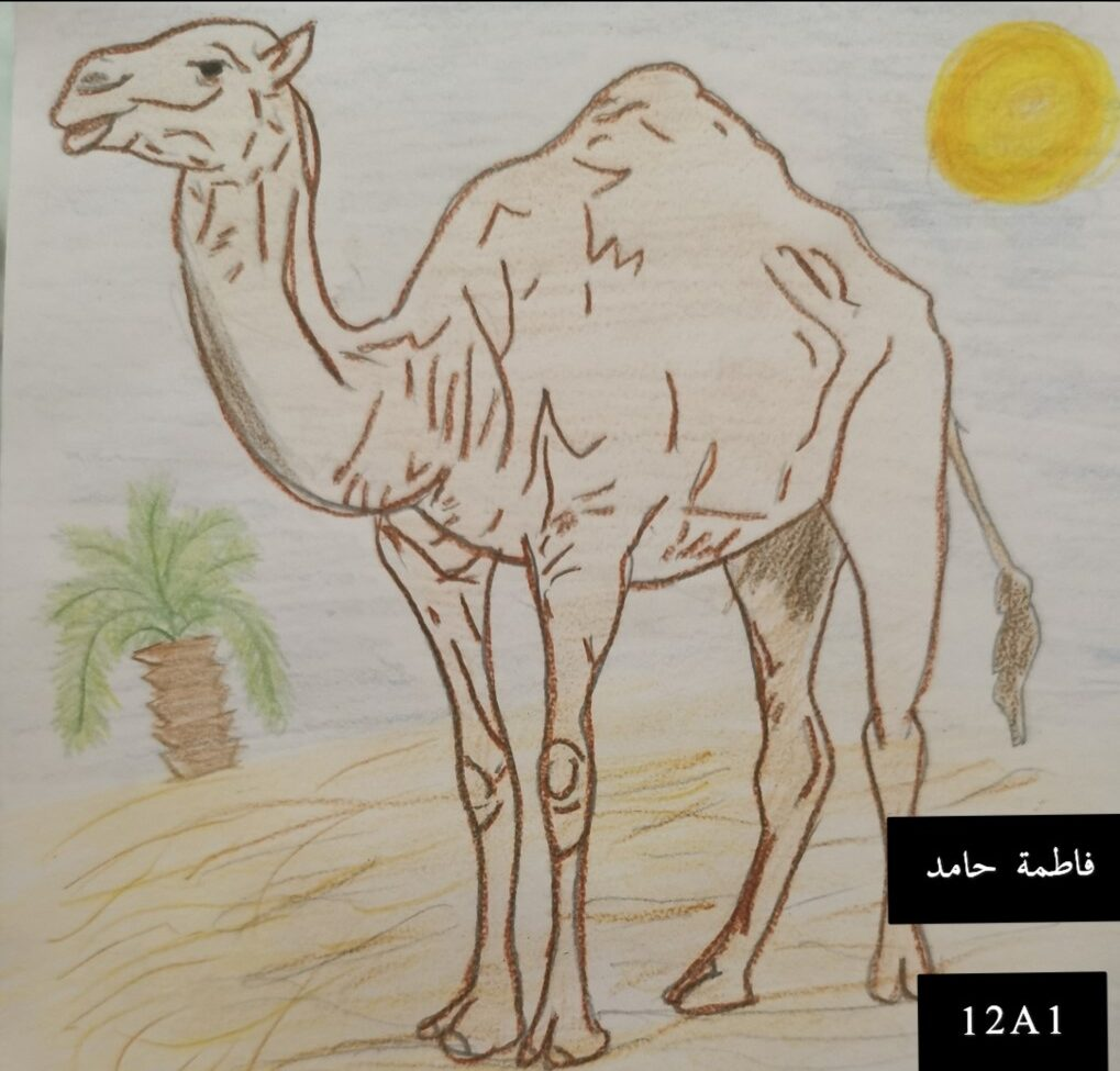 by Fatima Hamed