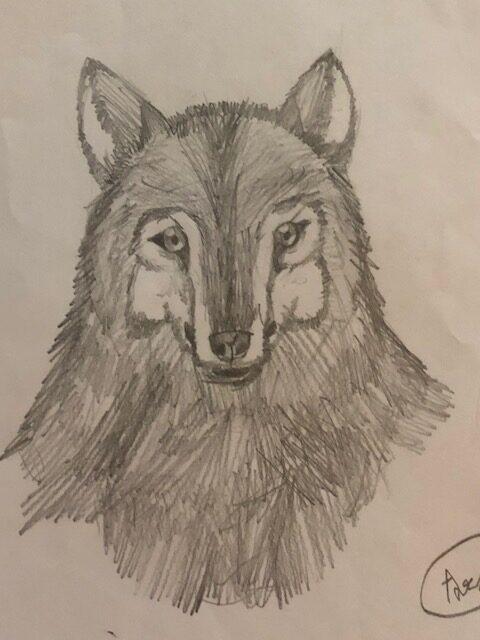 Fox sketch by Arshbir Singh